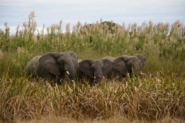 Kasanka Elephant Research