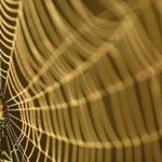 Kasanka web