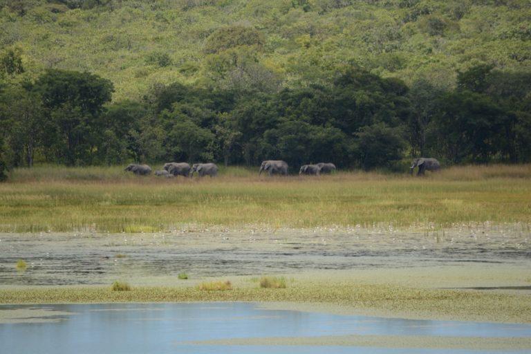 @ Kasanka National Park Elephants (6)
