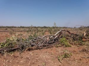 Land Destruction
