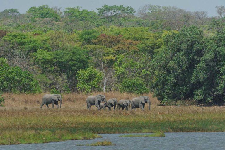 Elephants at Wasa Lake