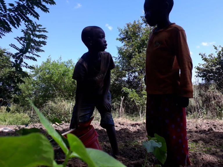 KCC Chongolo Eco Garden @Nyambe Kalaluka