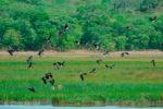 Kasanka Birds